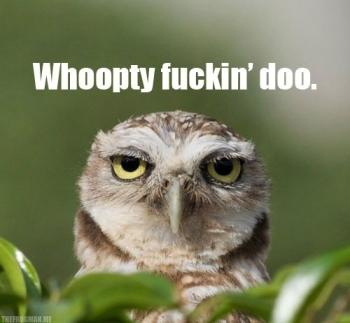 funny-bored-owl-face